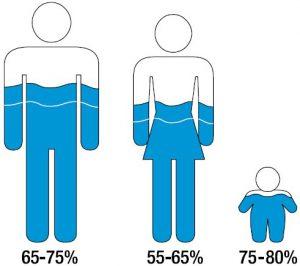 El cuerpo humano está constituido por agua en una alta proporción